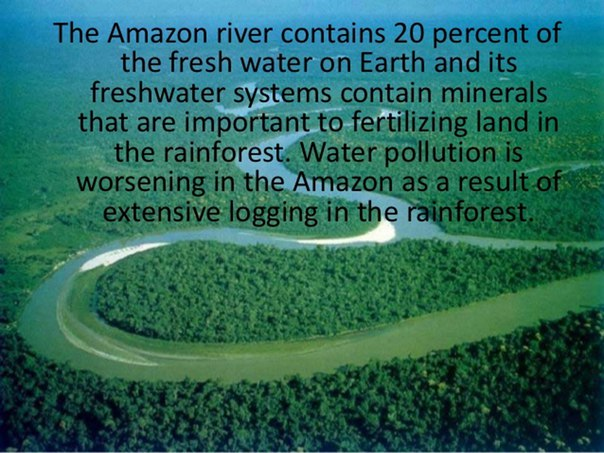 importance of rainforest preservation